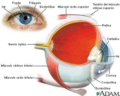 Instrucciones para usar su ojo